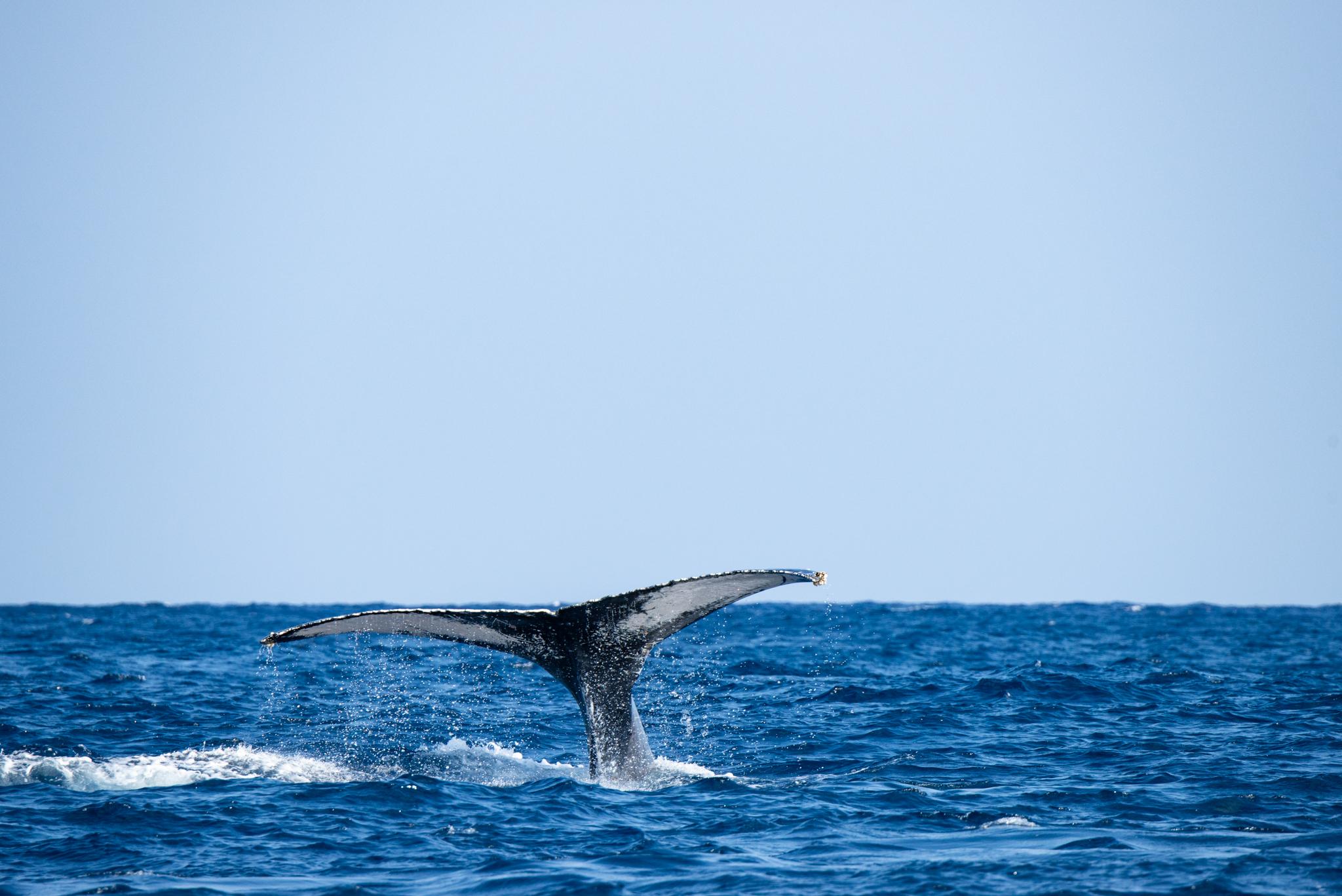 クジラいっぱい。