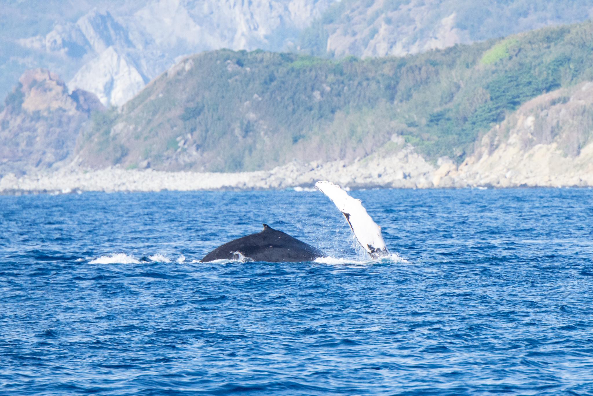 クジラいっぱいです。
