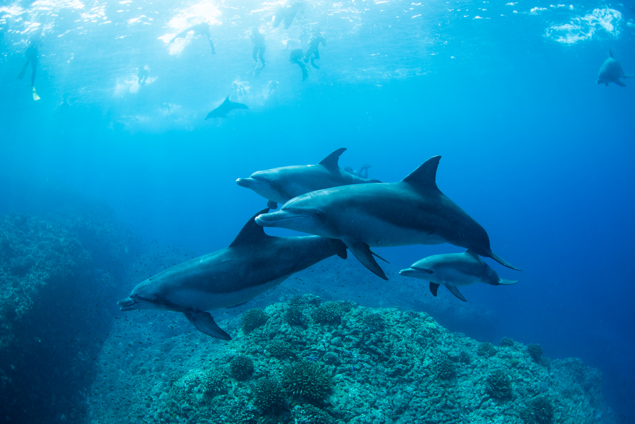 毎日イルカに会う一航海。
