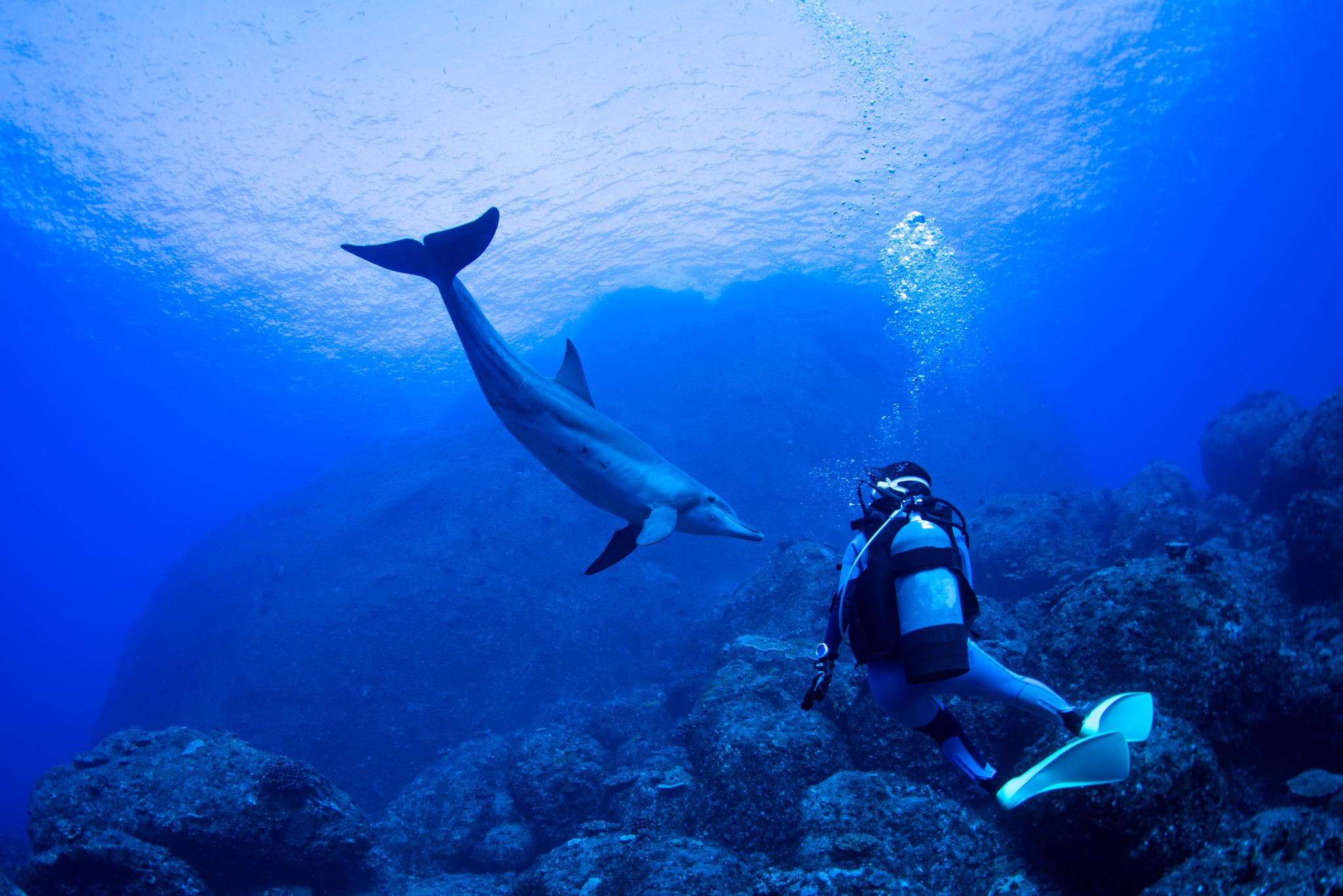 水中イルカ!